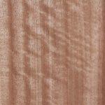 07 Queensland Maple